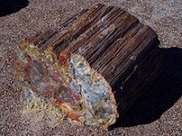 FOSSILIZED WOOD
