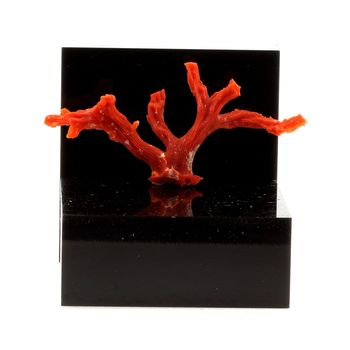 Corail rouge. 12.2 ct.
