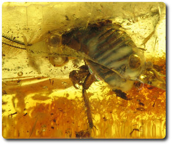 1.60 grams FOSSIL INSECT INCLUSION IN AMBER