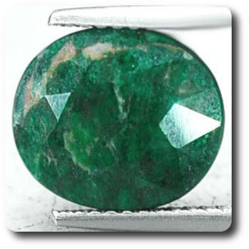 4.10 CT.  GREEN MAW SIT SIT