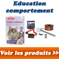 Education et comportement du chat
