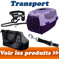 Transport du chien
