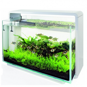 aquarium 80 litres pas cher animabassin. Black Bedroom Furniture Sets. Home Design Ideas