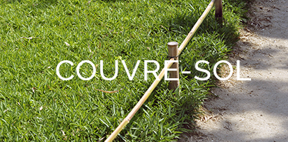Bambous couvre sol