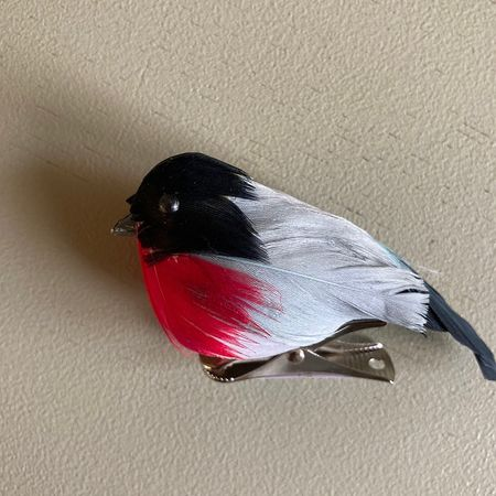 black and red bird on a clip
