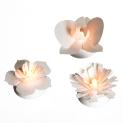 Trio of white petals