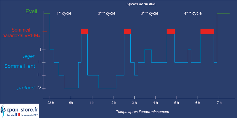 Cycles du sommeil - CPAP STORE FRANCE