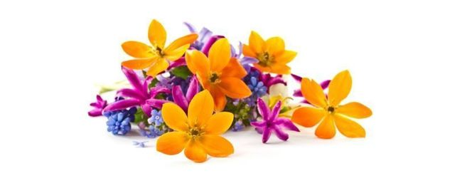 Aromes notes florales