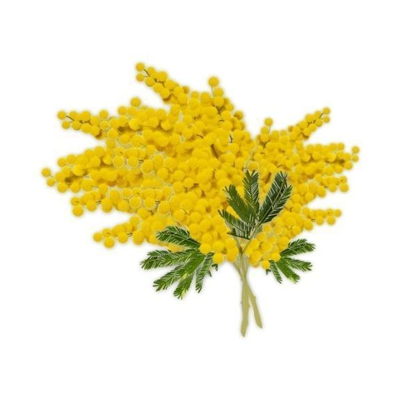 MIMOSA - Flavour
