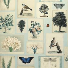 John Derian Flora and Fauna Cloud Blue wallpaper
