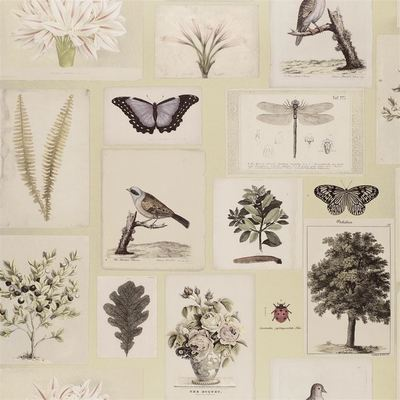 John Derian Flora and Fauna Canvas wallpaper