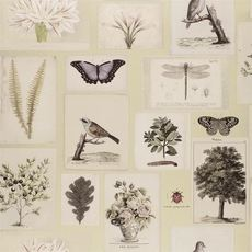 John Derian papier peint Flora and Fauna Canvas