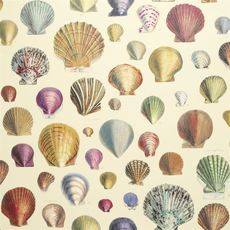 John Derian papier peint Captain Thomas Browns Shells