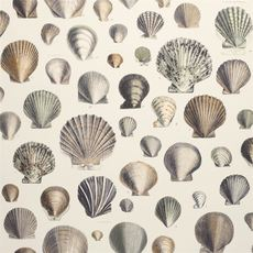 John Derian papier peint Captain Thomas Browns Shells oyster