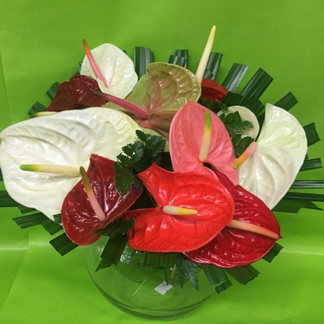 Bouquet d anthuriums
