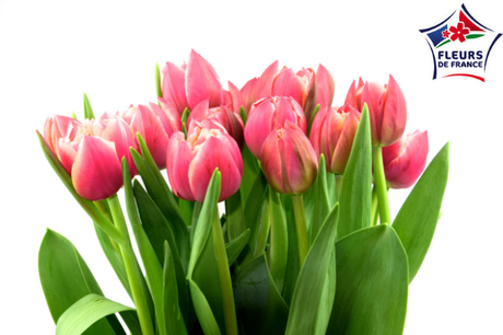 Bouquet de 30 Tulipes Couleurs Assorties