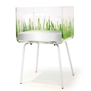 chaise herbe blanche