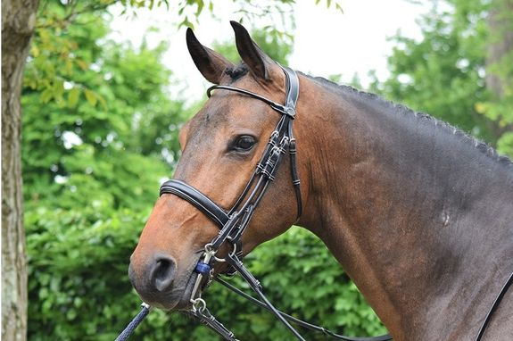 Patent Double Bridle Week