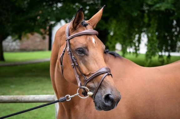 Bridle One Brussels + reins