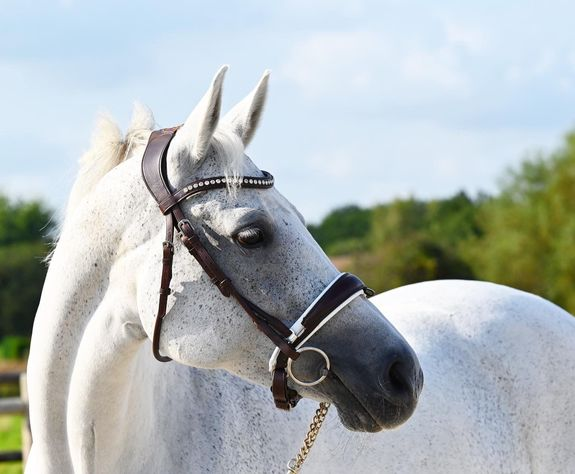 """Bridle """"Poesia"""""""