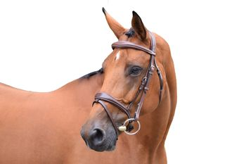 Bridle One Bruxelles + reins