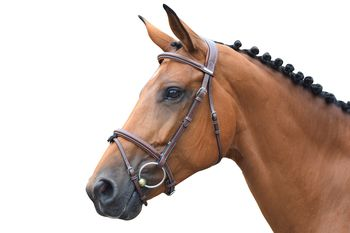 Bridle One London + reins