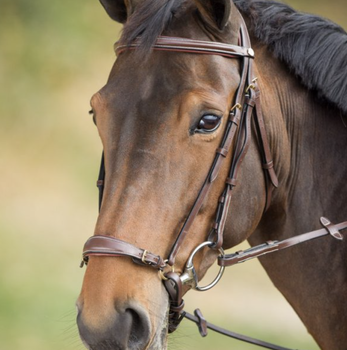 German bridle