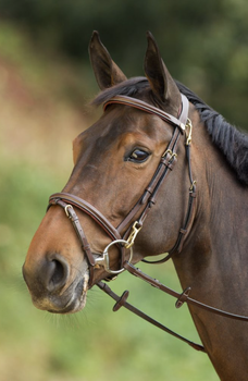Functional bridle