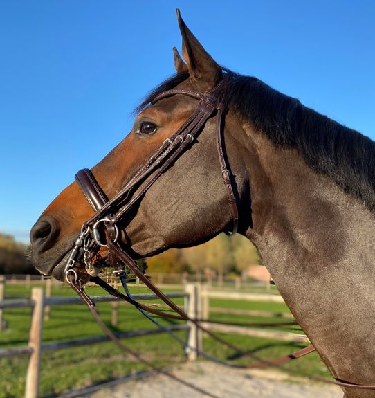 Fortuna Double Bridle