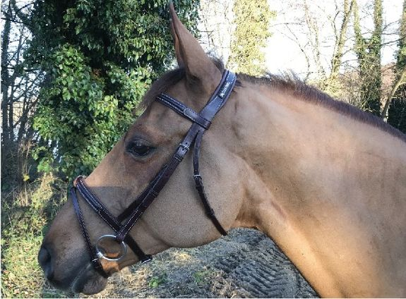 New Classic Bridle