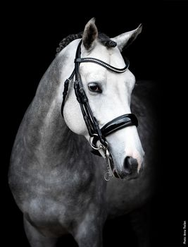 Double Bridle Venice