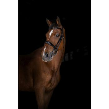 Elite double bridle