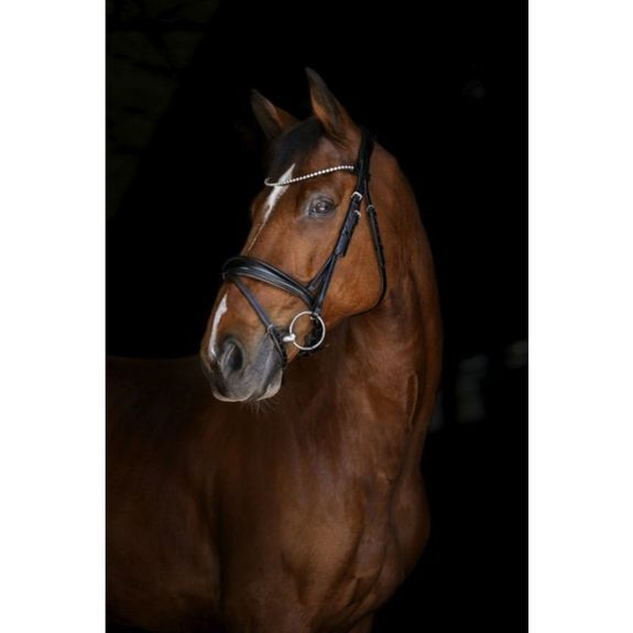 Elite Munich bridle