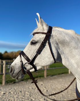 Fortuna Snaffle Bridle French Noseband