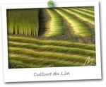LIN & COTON - coloris NATUR FIELD