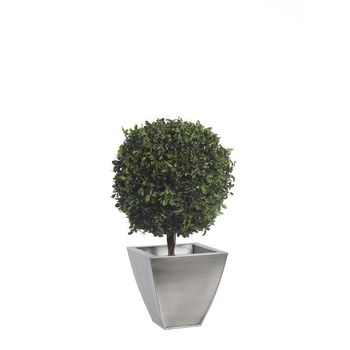 Arbre topiaire pitosporum