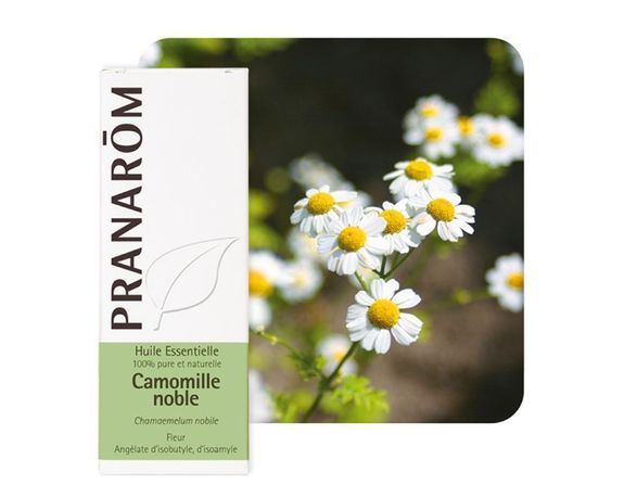 Pranarom Camomille Noble 5ml