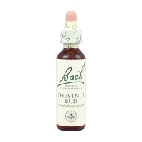 BACH ORIGINAL Chestnut Bud n°7 - 20ml