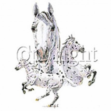 T-shirt FEMME manches courtes - Cheval chevaux Appaloosa - 6475
