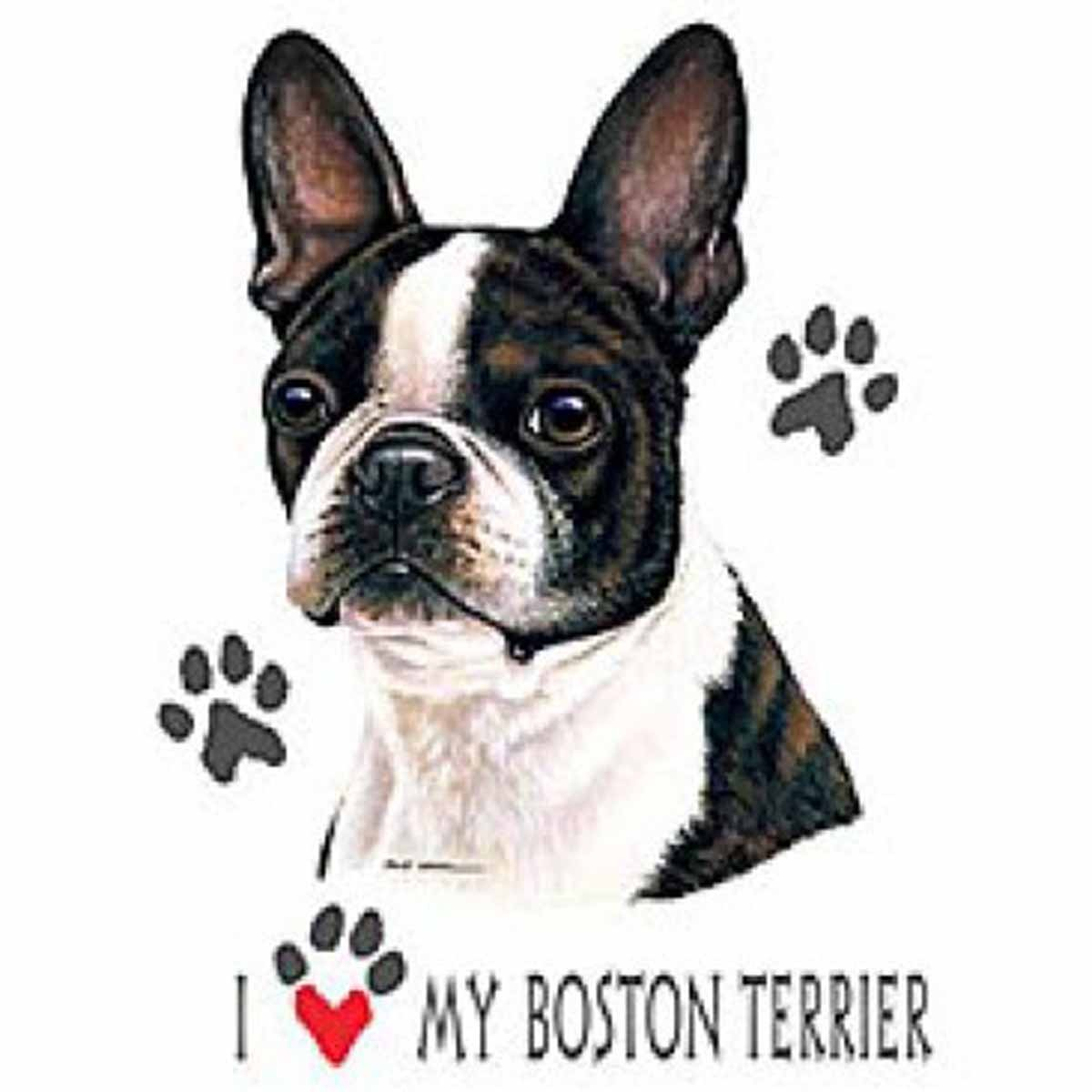 T-shirt femme manches courtes - Chien I love my Boston Terrier - 2417