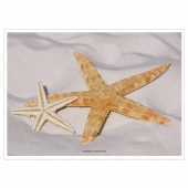 Set de table 31x43cm STARFISH - Carton de 2000 unités