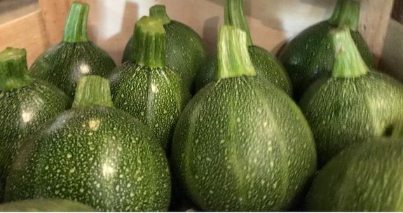COURGETTE RONDE X 2 PIECES