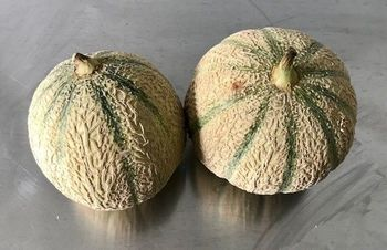 MELONS GROS X 2