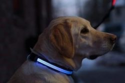 Collier Lumineux SAFETY DOG